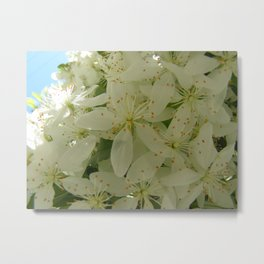 Pretty Spring Blossoms Metal Print
