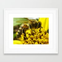 bee Framed Art Prints featuring bee by Dottie