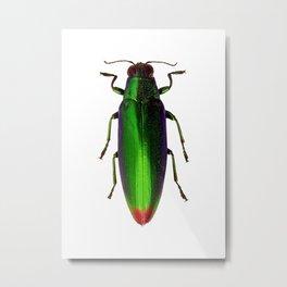 Chrysochroa Fulgidissima Jewel Beetle Metal Print