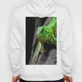 The Lizard King of Aruba Hoody