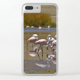 Chilean Flamingo (Phoenicopterus chilensis) Clear iPhone Case