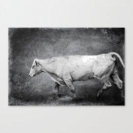 Cattle Rush Canvas Print