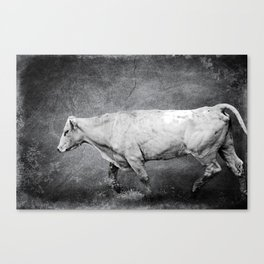 Cattle Rush Canvas Print