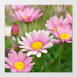 Daisy pink 090 Canvas Print