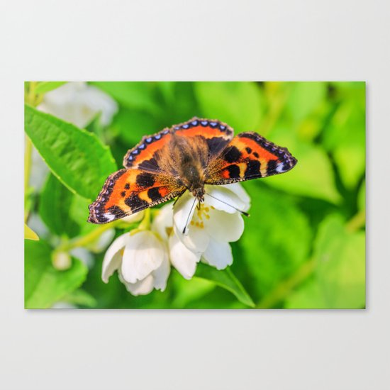Spring breakfast Canvas Print