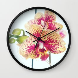 Orchid beauty Wall Clock