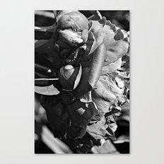 B&W Rain Drops Canvas Print