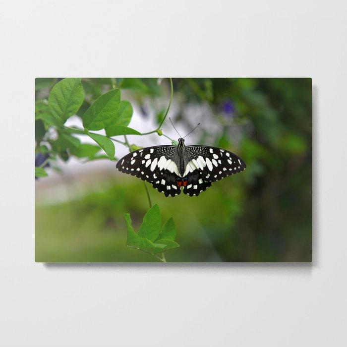 Butterfly Medium Metal Print