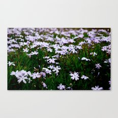 Field Canvas Print