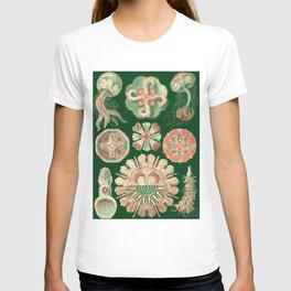 Ernst Haeckel Discomedusae Jellyfish T-shirt