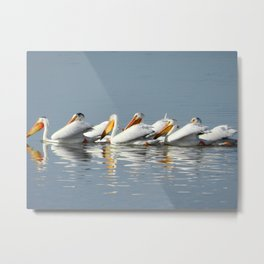 Conga Line of American Pelicans Metal Print