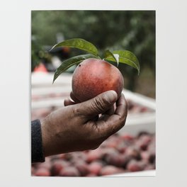 Migrant workers feed us. Poster