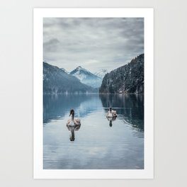 Couple of swans, romantic scene in bavarian alps Art Print