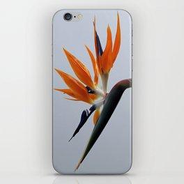 The bird of paradise flower iPhone Skin
