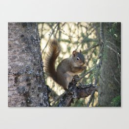 Soldotna Red Squirrel Canvas Print
