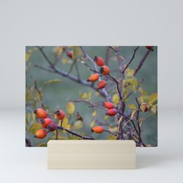 Rosehips Mini Art Print