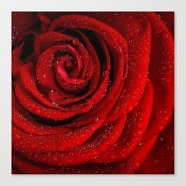 Red rose with sparkling droplets - Beautiful elegant Roses Canvas Print