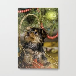 Tiny Yorkie Puppy in a Gold Star Basket underneath a Christmas Tree Metal Print