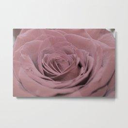 Light Pink Rose Metal Print