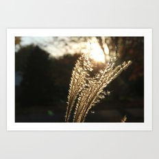 Grasses in the Sun Art Print