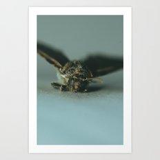 Moth in Blue Dawn Art Print