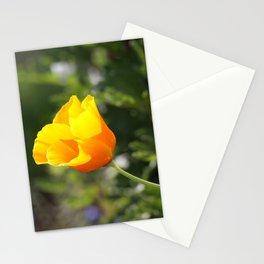 Sunlit Eschscholzia californica Stationery Cards