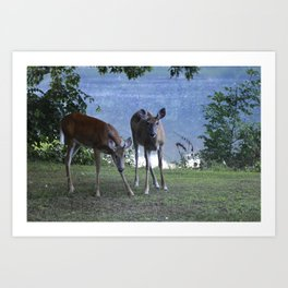 Grazing Deer Art Print