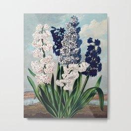 Robert John Thornton - Hyacinths Metal Print