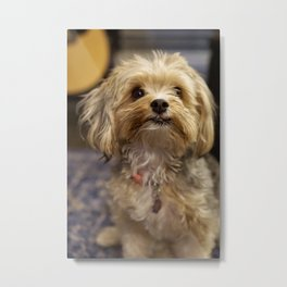 A Poised Puppy Metal Print