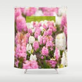 Hyacinthus pink white flowering Shower Curtain