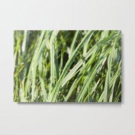 sun-lit grass Metal Print