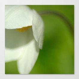 White flowercup Canvas Print