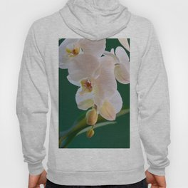 Blossoming White Orchid Flower on Green Background Hoody