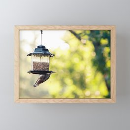 bird eating Framed Mini Art Print
