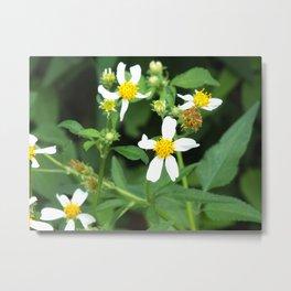 Flower in Bloom #6 Metal Print