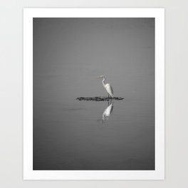 """Mirrored Egret"" by Murray Bolesta Art Print"