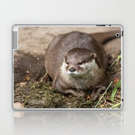 Sunning Otter Laptop & iPad Skin
