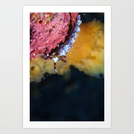 Periwinkle blue dragon nudibranch on a journey Art Print