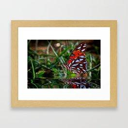 Beautiful Butterfly.... Framed Art Print