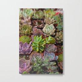 Miniature Succulent Garden Metal Print