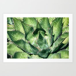 Shaw's Agave Art Print