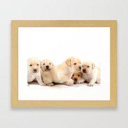 Puppies Labrador Retriever Framed Art Print