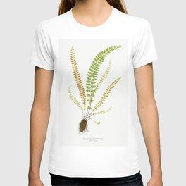 Asplenium Trichomanes (Maidenhair Spleenwort) from Ferns British and Exotic (1856-1860) by Edward Jo T-shirt