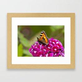 Butterfly small Tortoiseshell Framed Art Print