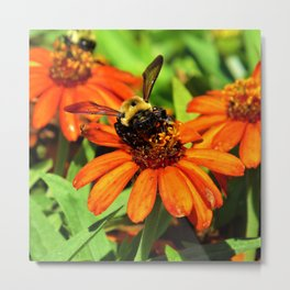 All the Buzz Metal Print