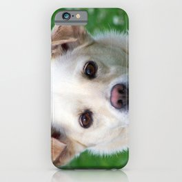 Blond dog portrait iPhone Case