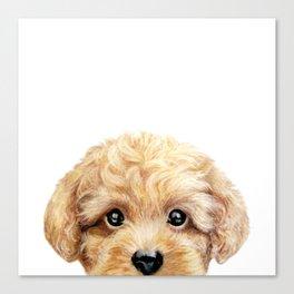 Toy poodle Dog illustration original painting print Canvas Print