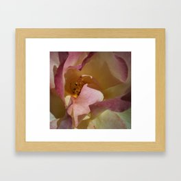 Rose Shadows Framed Art Print
