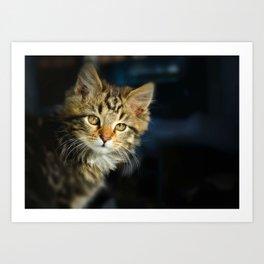 Serious cat portrait Art Print