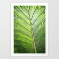 palm Art Prints featuring Palm by ALLY COXON
